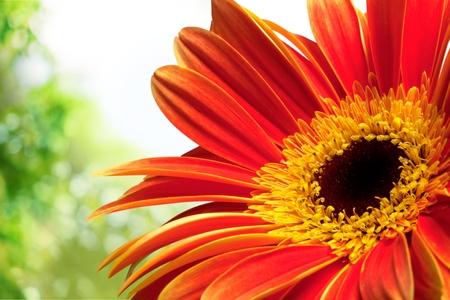 flower close up: Single Flower.
