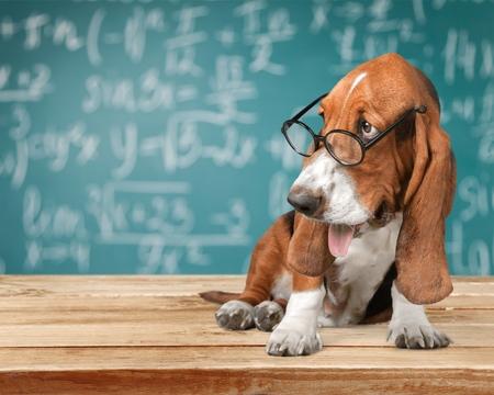 studious: Dog.
