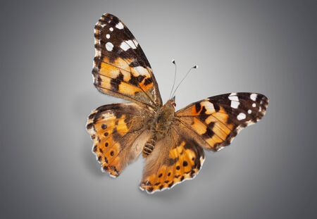 multiple image: Butterfly. Stock Photo