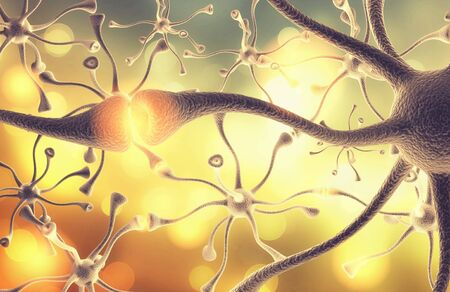 celula animal: Neurona.
