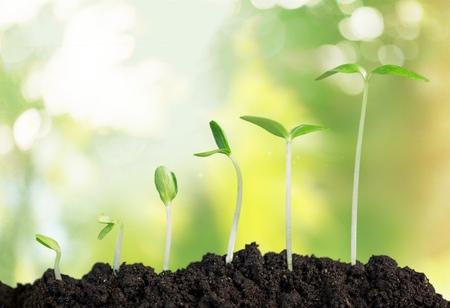crecimiento planta: Crecimiento.
