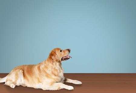 dissimilarity: Dog.