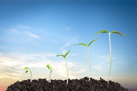 seed: Seed. Stock Photo