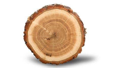 樹木年輪。 写真素材