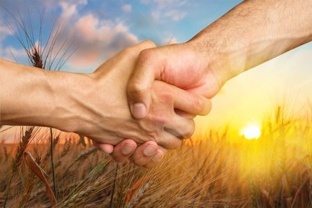 Farmers handshake over the wheat corp. Stock Photo - 79828391