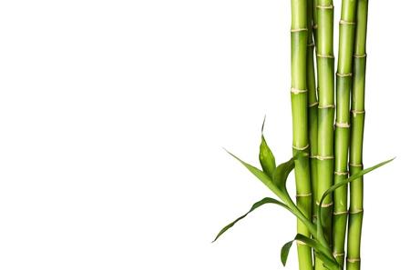 concept: Germoglio di bambù. Archivio Fotografico