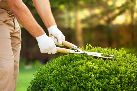 males only: Gardening. Stock Photo