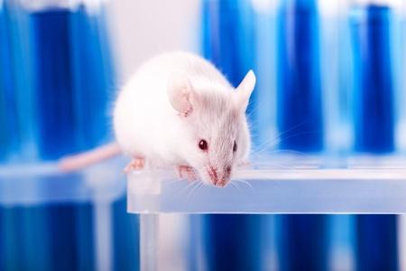 Mouse. Stok Fotoğraf - 80153043