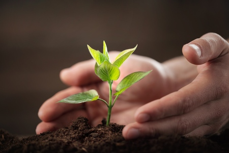 cultivate: Environment. Stock Photo