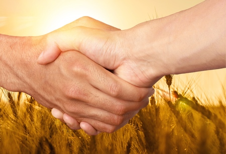 Farmers handshake over the wheat corp. Stock Photo