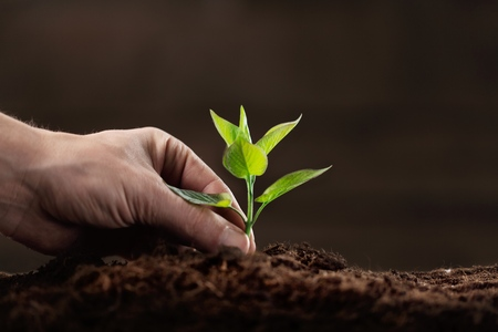 csr: Hands of farmer growing and nurturing tree growing on fertile soil with green and yellow bokeh background  nurturing baby plant  protect nature Stock Photo