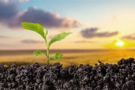Seedling. Banco de Imagens