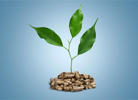 Biomassa.