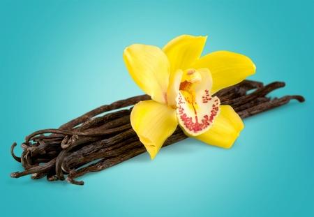 Vanilla. Banque d'images