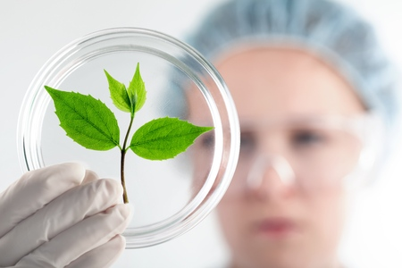 Scientist holds sprout.