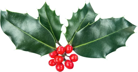 Cute holly leaves and berries, christmas decoration isolated on white background