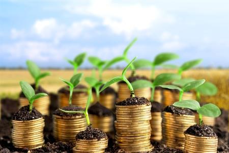 Monety w glebie z młodymi roślinami na niewyraźne tło Zdjęcie Seryjne