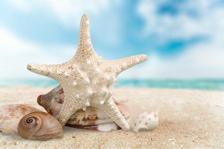 A sugar starfish and various seashells. Foto de archivo
