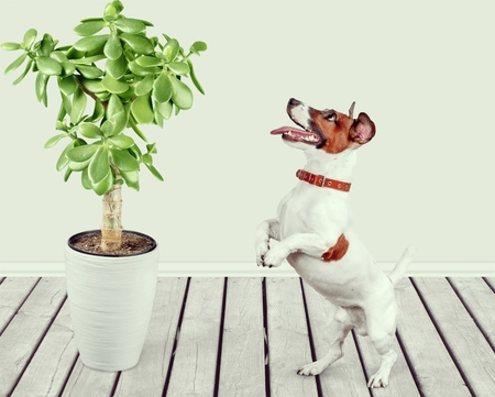 dog and plant at home