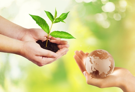 Two people human hands holding/ saving growing big tree on soil eco bio globe in clean CSR ESG natural background: World environment day go green concept:
