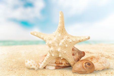 A sugar starfish and various seashells. Stock Photo