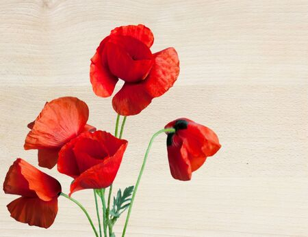 floral design, decoration flowers, poppies border - corner Stock Photo