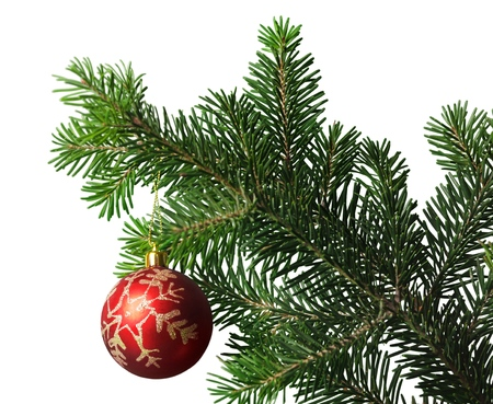 Red bauble on green christmas fir tree on background Standard-Bild