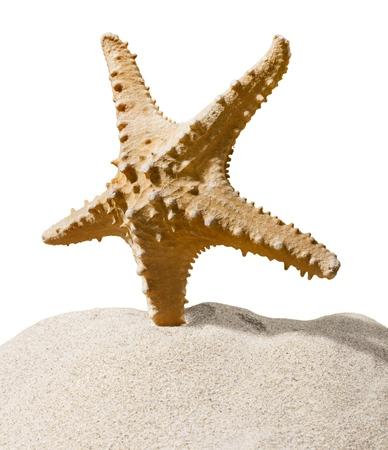 One Starfish isolated on  background. Standard-Bild