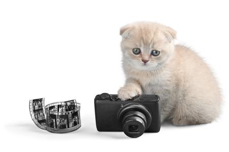 Scottish Fold Kitten with Camera