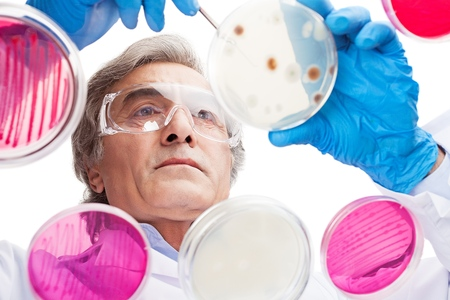 Focused senior life science professional pipetting solution into the pettri dish.  Lens focus on the man researcherss face.