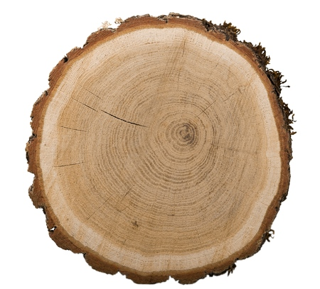 Großes kreisförmiges Stück Holz Standard-Bild