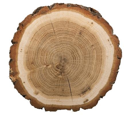 大きな円形の木片