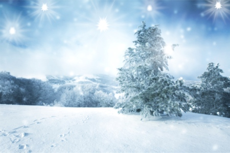 Christmas background with winter trees Stock Photo