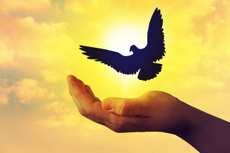 Man praying and free bird enjoying nature on sunset, Human raising hands. Worship christian Religion. silhouette pigeon flying out of two hand and freedom concept and international day of peace.