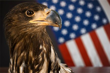 American Bald Eagle - symbol of america -with flag. United States of America patriotic symbols. Stock Photo