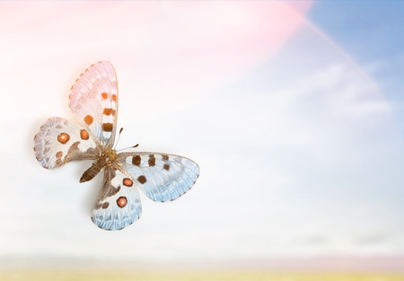 Butterflies on sky background