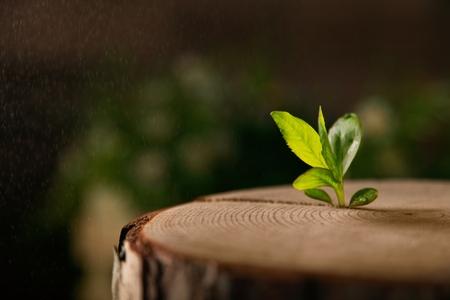 Nouveau concept d'idée de vie avec semis poussant de plus en plus (arbre). Développement des affaires et éco symbolique.