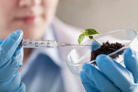 Close-up of a green plant and hand of scientist with tweezers