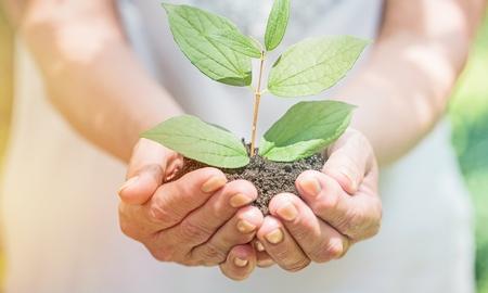 Female medicine doctor hold plant 写真素材