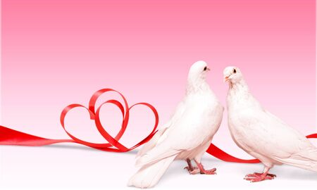 two loving white pigeons Stock Photo
