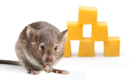 Vorderansicht der hölzernen Maus Standard-Bild - 98220897