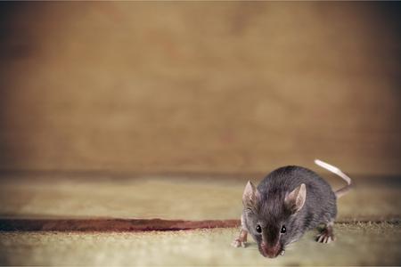 Vorderansicht der hölzernen Maus Standard-Bild - 99058290