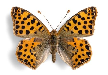 귀여운 나비 동물 흰색 절연