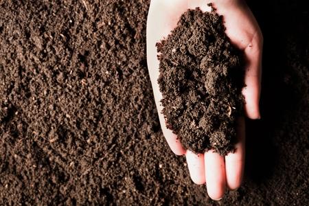Suelo en mano, palma, tierra cultivada, tierra, tierra, fondo de tierra marrón. Jardinería orgánica, agricultura. Primer plano de la naturaleza. Textura ambiental, patrón. Barro en el campo. Foto de archivo