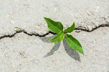 plant taking root on a concrete footpath 写真素材