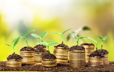 Stack of coins with growth sprout plant Stock Photo