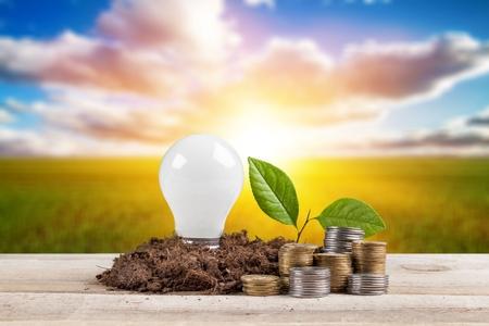 Energy saving light bulb and tree growing