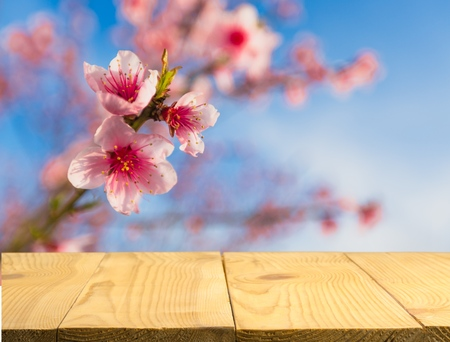 Spring background with white blossoms and sunbeams in front of a wooden table 版權商用圖片
