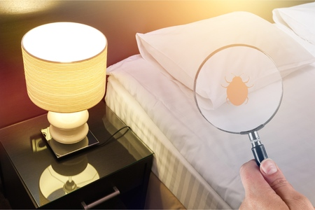 Hand with magnifying glass detecting bed bug