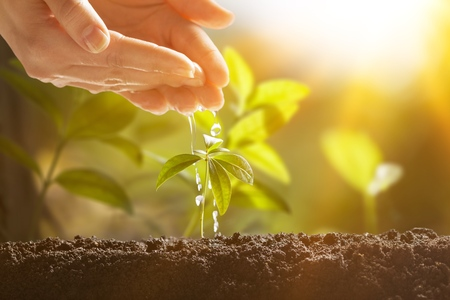 Hand with green plant